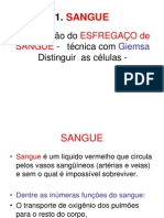 aula de células do sangue