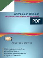 Animales en Extincion