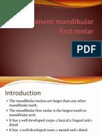 (Oral Ana) Man 1st Molar