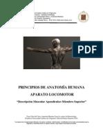 Descripcion Musculos Apendiculares Miembro Superior 2010