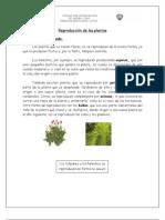 Reproducción de las plantas