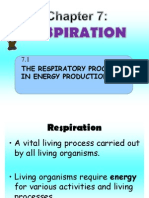 7.1 Process Respiration