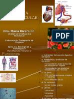 Cardiovascular Estructura Circulacion,CIENCIAS 2006