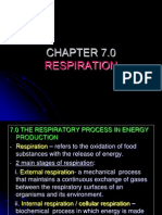 Chapter 7 Respiration