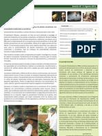 Boletín PBD N°7