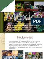 Mega Divers Id Ad en Mxico