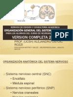 2011 Neuro Sistema Nervioso Organizacion General