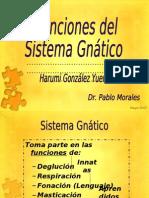 Funciones Del Sistema Gnatico