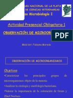 Apo 1 Observacion de Microorganismos Fabiana