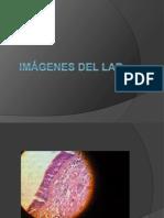 Imágenes del lab