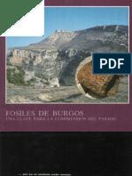1991.- Alvarez_ C. Fosiles de Burgos
