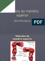 Músculos 1