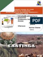 Apresentação Caatinga!!!