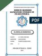 GLANDULAS-MAMARIAS