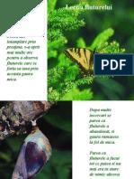 Lectia_fluturelui