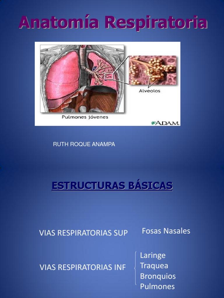 Anatomía Respiratoriaaaaa