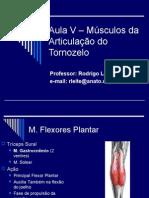 Aula v – Músculos Da Articulação Do Tornozelo
