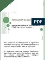 REPARACIÓN DE LOS TEJIDOS