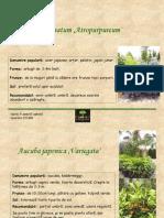 Arbusti_ornamentali3