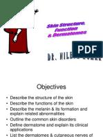 Skin Structure Function Dermatome