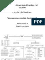 Mapas Concept Anemia