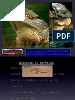 Musculos de Reptiles1
