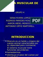 Diapositiva Musculatura de Ave2007