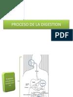 Proceso de La Digestion