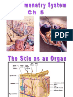 skin and its appendages