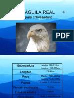 Águila Real 2