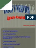 DIAPOS.. Aparato Respiratorio(Vasos y Nervios) ROMINA