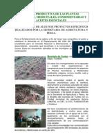 Cadena_de_plantas_Aromáticas