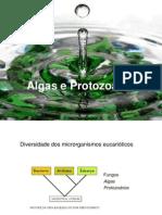 9519_Algas e protozoarios