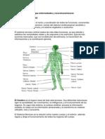 Drogas Enfermedades y Neurotransmisores