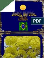 Brasil Natural - Flores Do Cerrado