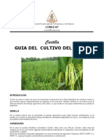 file31_Cartilla_Arroz