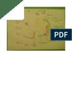 Cortes Nivel Cervical Medio, Decusacion Motora y Sensitiva