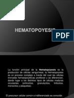Expo Sic Ion de Funciones Del Sistema Hematopoyetico