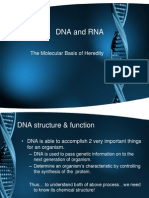 DNA and RNA