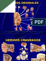 20  NERVIOS CRANEALES