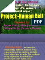 Human Cell (Hsp)