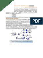 Activación de linfocitos