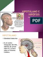 BM Hipotálamo e Hipófisis (26-09-2011)