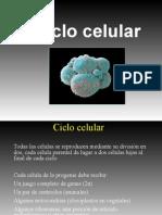 ciclo-celular