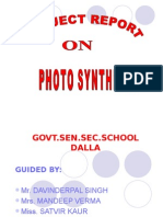 Project Report Photosynthesis-2
