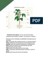 Anatomía de la planta