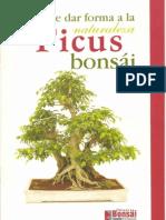 Bonsai El Ficus