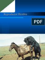 C8 Reproductor Hembra1