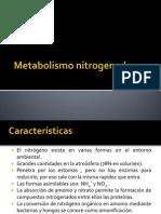 diapos metabolismo nitrogenado