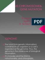 Genome,Chromosome&Gene Mutation